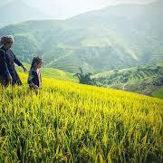 Tips Memilih Usaha Yang Tepat Di Desa Yang Mayoritas Bertani