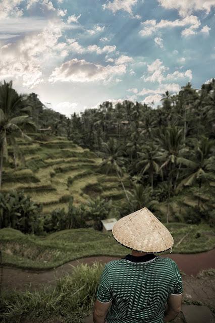 rice fields campi di riso le 10 cose piu belle da visitare a bali