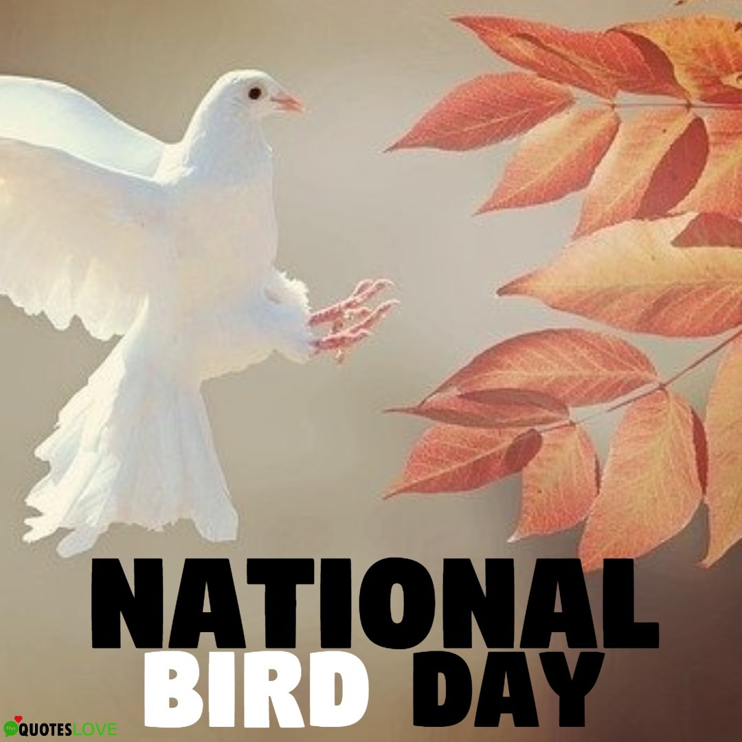 National Bird Day 2020 Images, Poster