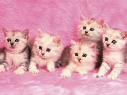 New Baby Cats Animal Hd Wallpape44