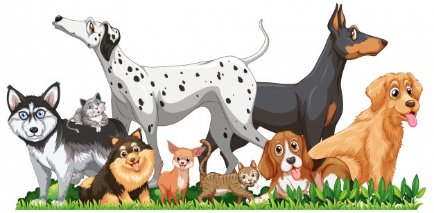 Your Pet's Health – Protect Your Children