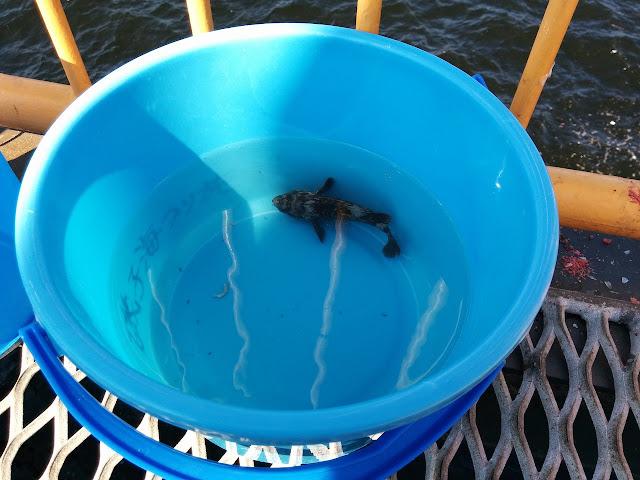 Cara Membuat Kolam Ikan Sederhana Pakai Ember Plastik Arafuru