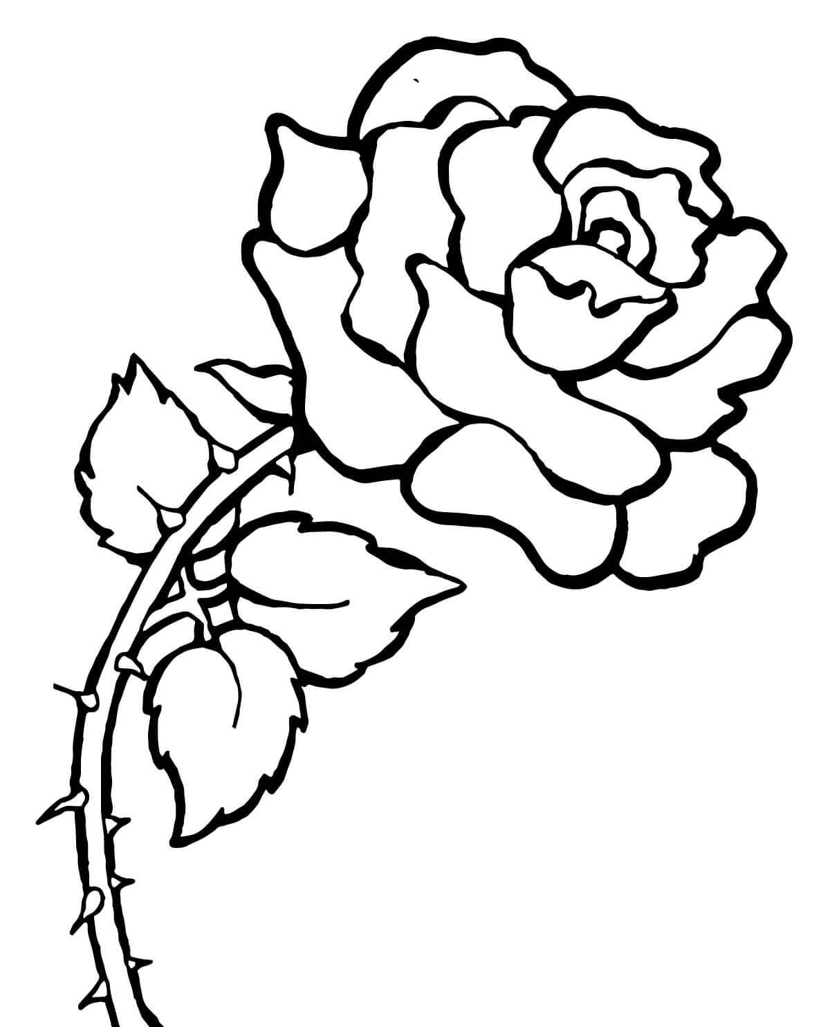 mewarnai bunga mawar untuk anak perempuan 5