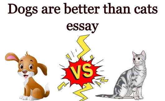 Dogs are better than cats essay