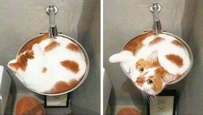 27 Pictures Show That The World Has A Plan For All Of Us - This cat looks like a cappuccino.