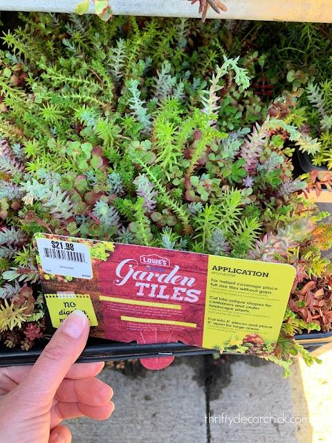 easy to grow succulent garden tiles