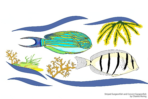 Striped surgeonfish and convict surgeonfish