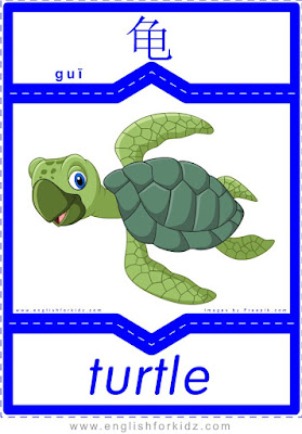 Turtle - English-Chinese flashcards for wild animals topic