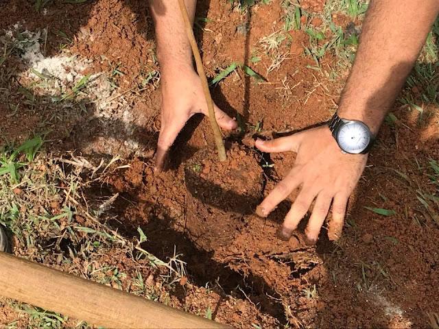Lançado projeto que incentiva a arborização e a educação ambiental em Pinhal