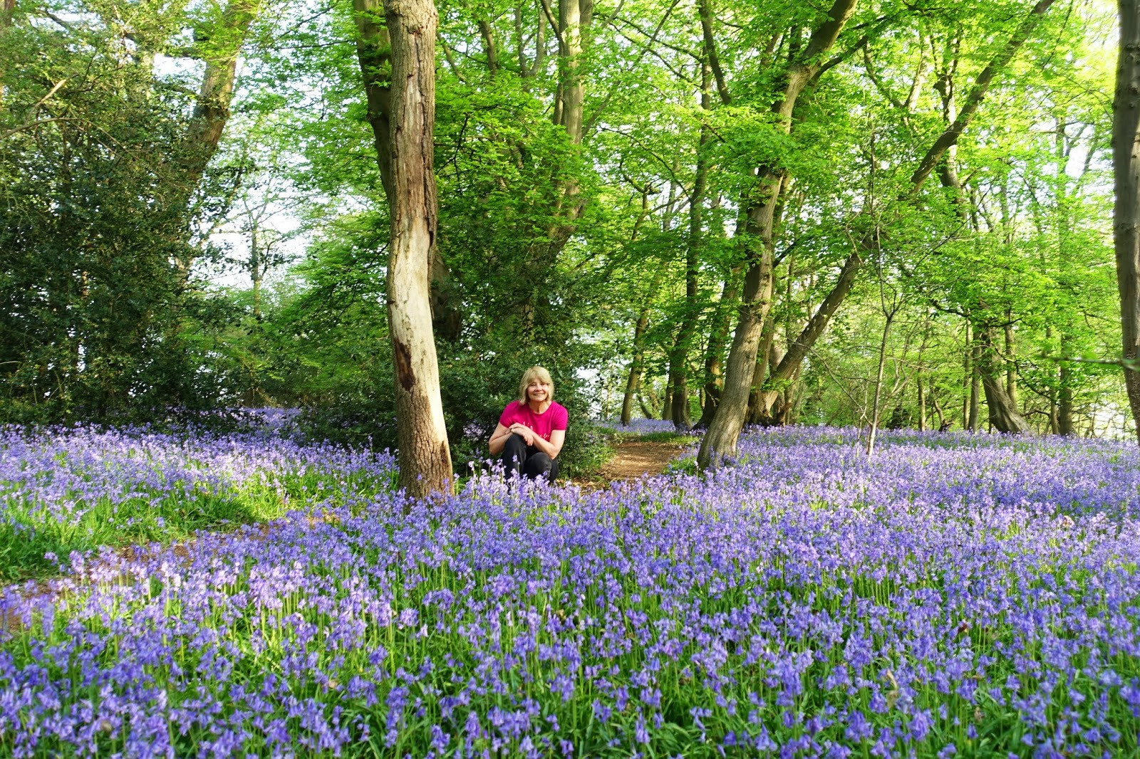 Staying on the path:  Is This Mutton? blogger Gail Hanlon on a walk through a secret bluebell wood