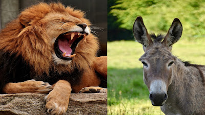 The Donkey's Brain and The Lion Bedtime Moral Story