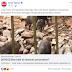 Kerana Menfitnah Babi, Portal Sinar Harian Dikritik.