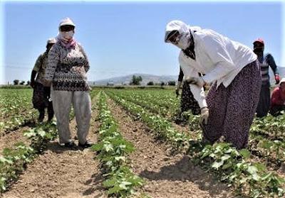 Kadın Çiftçilere Yönelik Proje Destekleri Nelerdir?