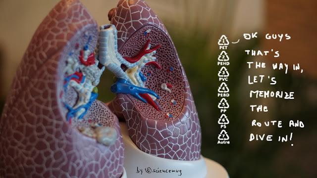 Lungs & microplastics (by @sciencemug)
