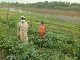 एकता की शक्ति का परिचय देते हुए महिलाएं सब्जी उत्पादन कर अपने गांव को दिला रही अलग पहचान