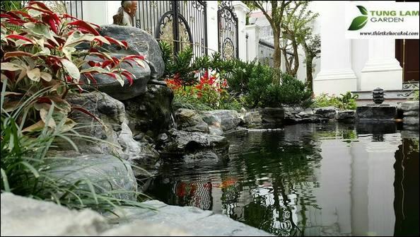 Thiết kế hồ cá Koi, TungLam Garden, hồ cá koi đẹp