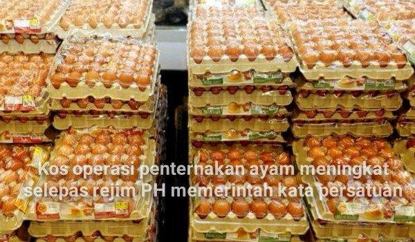 Kos operasi penternakan ayam meningkat selepas rejim PH memerintah kata persatuan