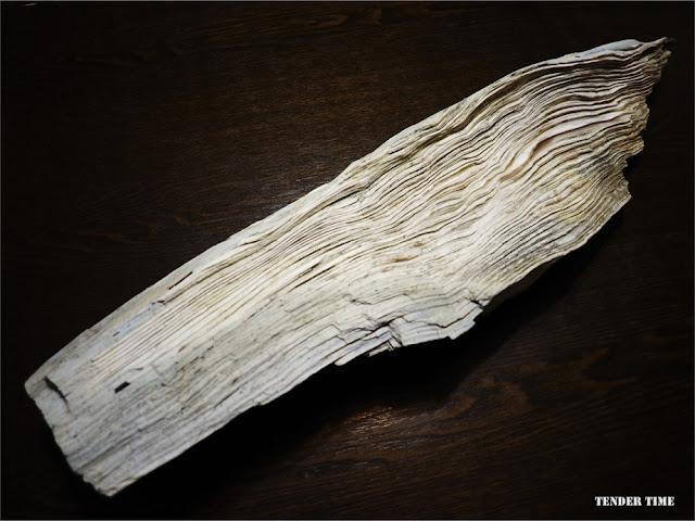 ペトリファイウッド 珪化木 Petrified wood 和賀仙人鉱山