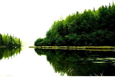 पर्यावरण एवं पारिस्थितिकी पीडीऍफ़