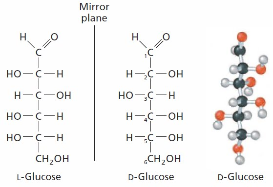 If you did that ...D Glucose And L Glucose