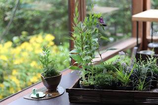 カゴのケースに入ったたくさんの山野草盆栽用のポット苗