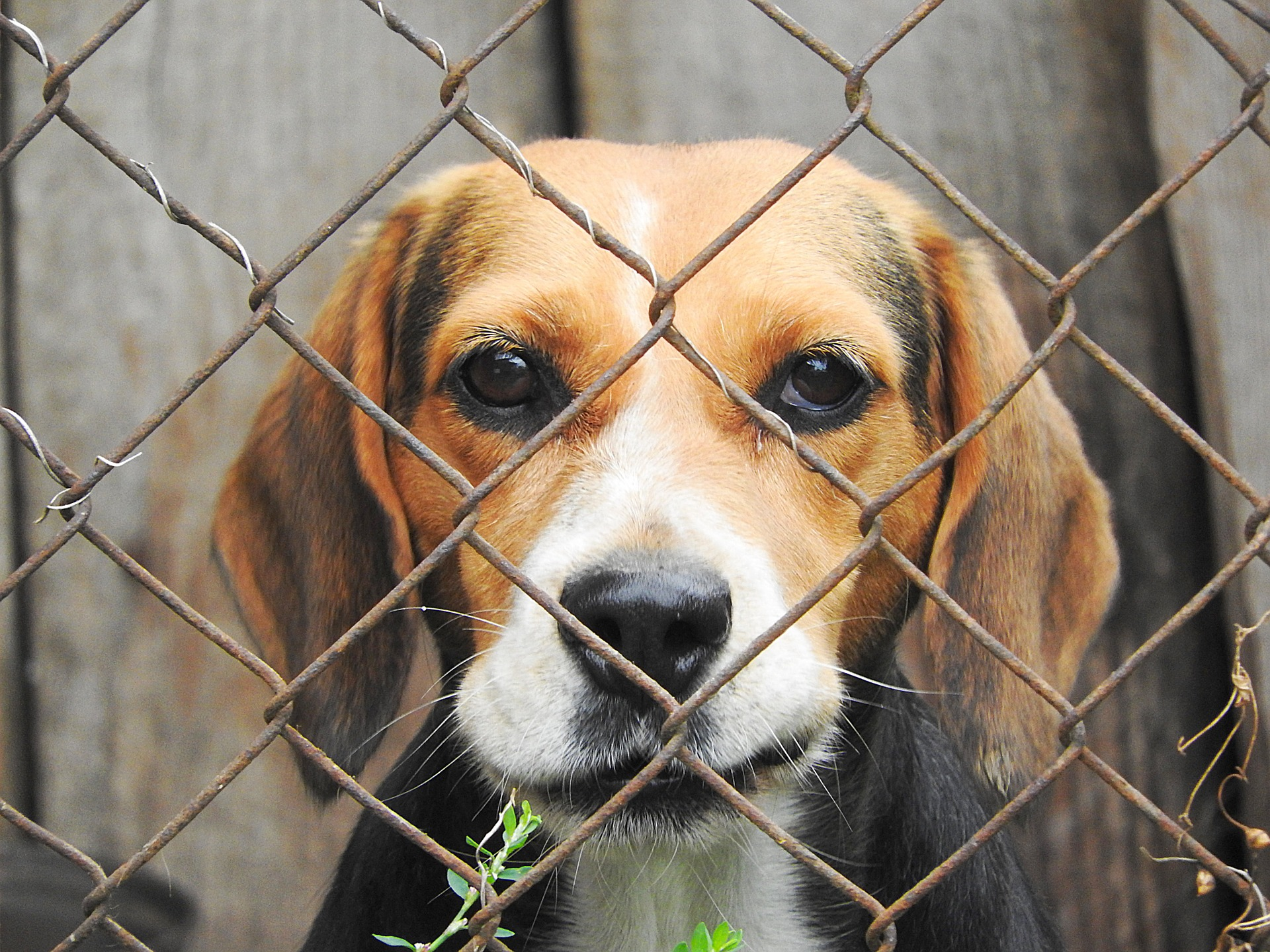 Dog slaughterhouse closed down