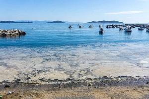 deniz salyası nedir nasıl oluşur