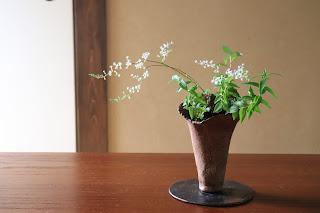 山野草盆栽 ヒトツバショウマ