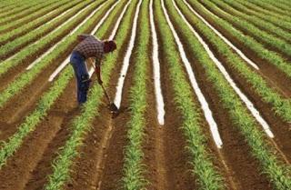 Kharif cultivation update