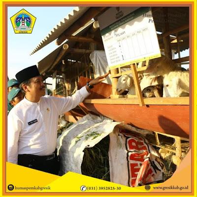 Baznas Pusat Bagikan 329 ekor kambing Kepada Peternak Dhuafa Gresik