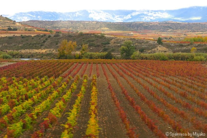 El Tren del Vino de La Rioja 北スペイン・リオハの紅葉する葡萄畑をワイン列車の車窓から