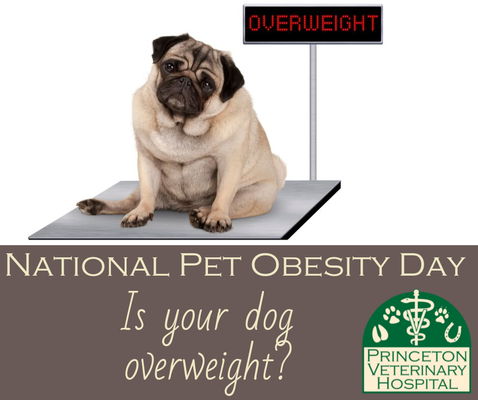National Pet Obesity Day Wishes