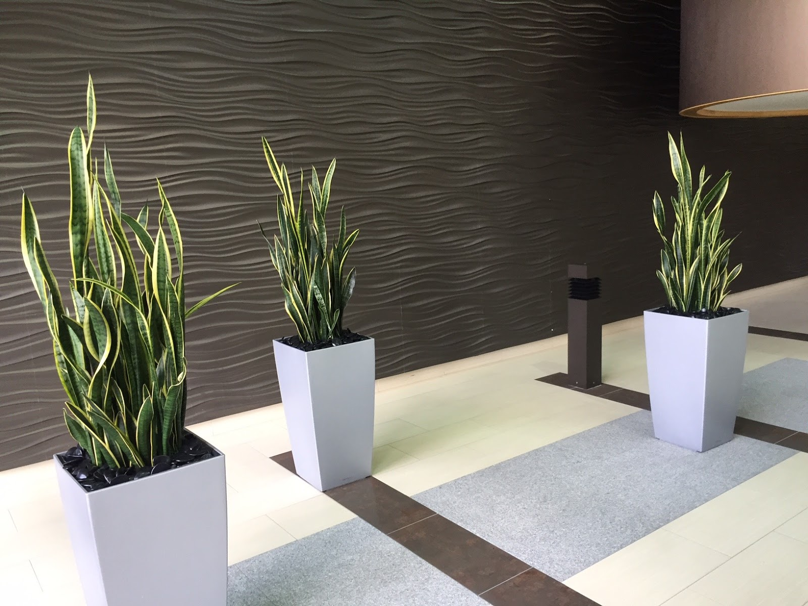 Beautiful Interior Office Plants For Your Corporate Lobby.