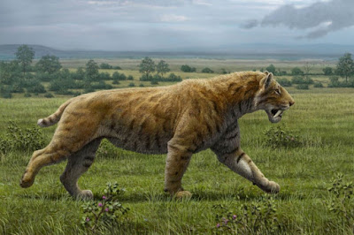 Smilodon populator - Dientes de sable