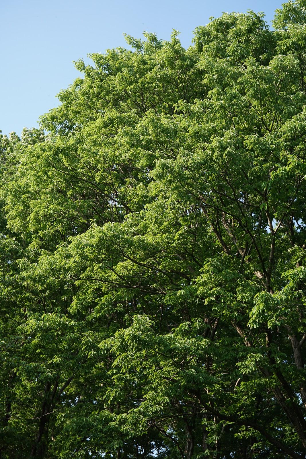 風に葉を戦がせる大きな木