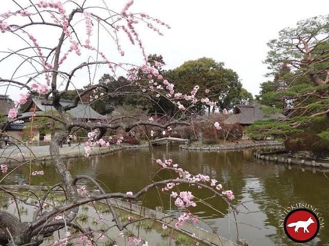 Jardin du temple umenomiya à Kyoto