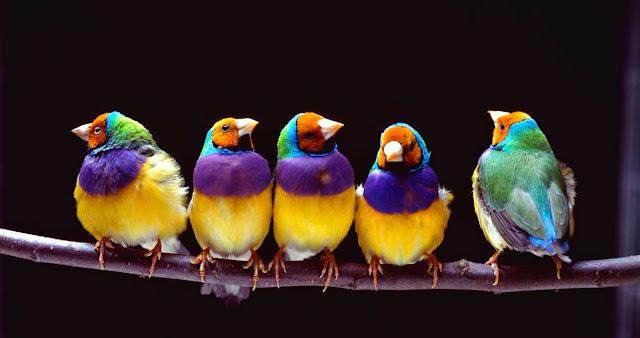 Pájaros únicos y originales