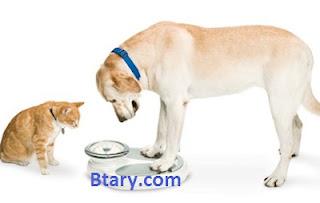 السمنة فى الكلاب - Dog Obesity - اسبابها وعلاجها
