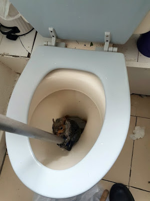 OMG: Poor Squirrel Had To Be Rescued After Getting Stuck In Student Toilet