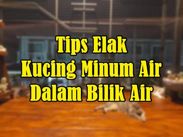 Tips Elak Kucing Minum Air Dalam Bilik Air