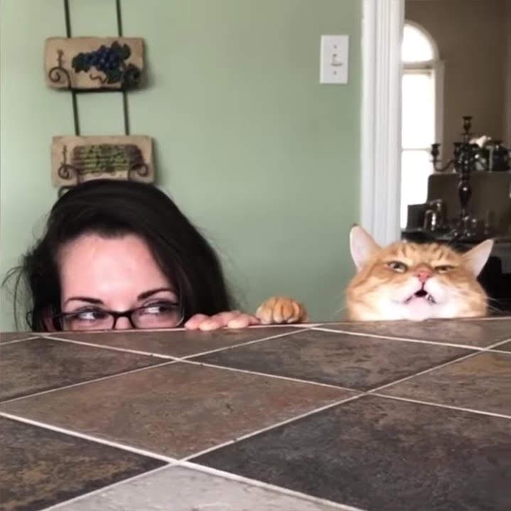 Best Pets Of The Month : 2019年3月に癒やされた微笑ましい動物ビデオの総集編