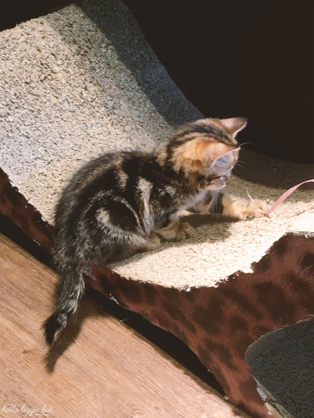 kitty cafe nottingham