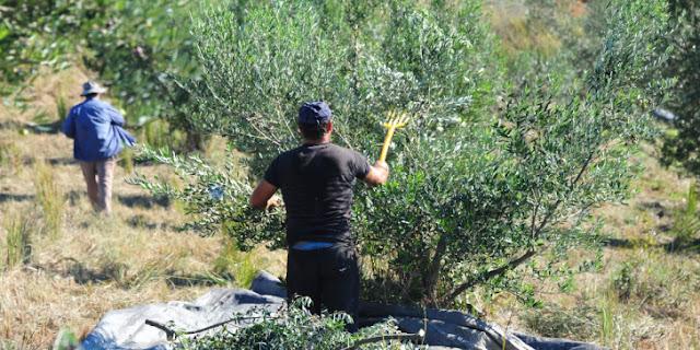 Νεκρός άντρας έπειτα από ξυλοδαρμό Ρομά στα Μέγαρα