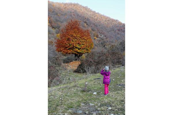 Одинокое дерево ещё не сбросившее свои золотые одеяния