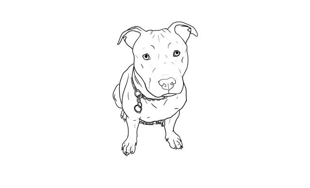 dibujos a lapiz faciles de perros pitbull