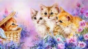New Baby Cats Animal Hd Wallpape34