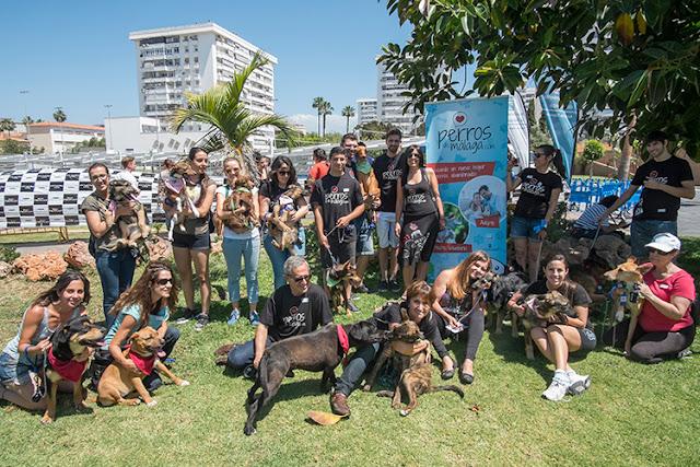 Vídeo | Los perros el adopción enamoran a Málaga en una pasarela canina