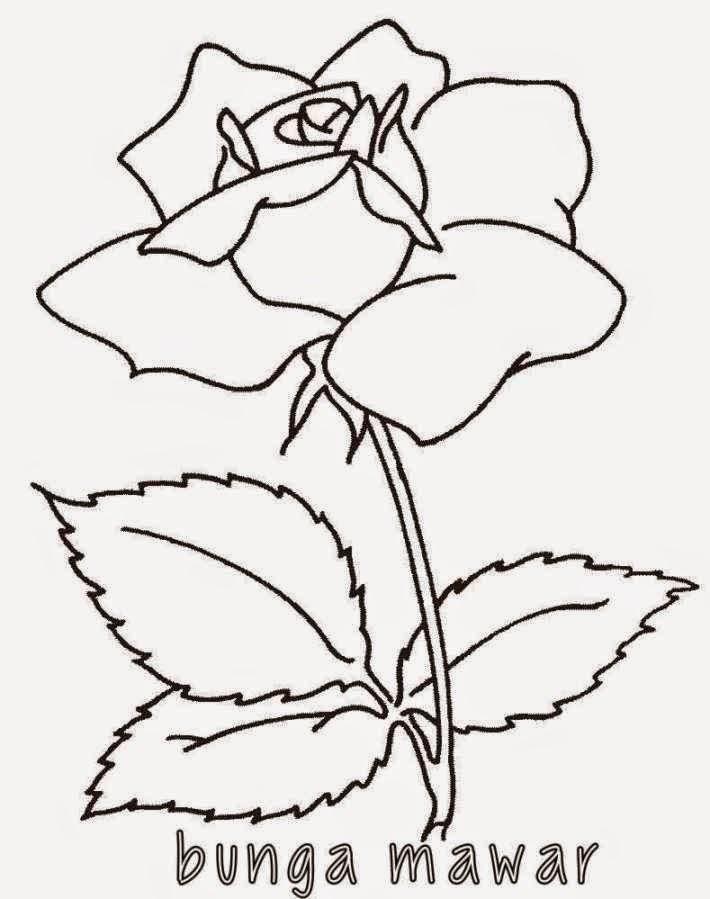 Gambar Mewarnai Bunga Mawar Gambar Mewarnai Lucu