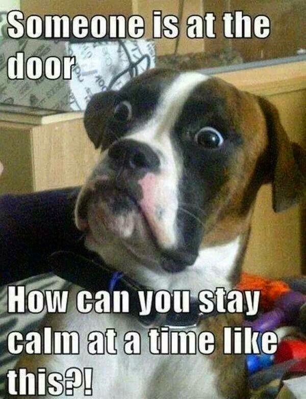 Funny Dog Door Calm Meme Joke Picture - Someone is at the door