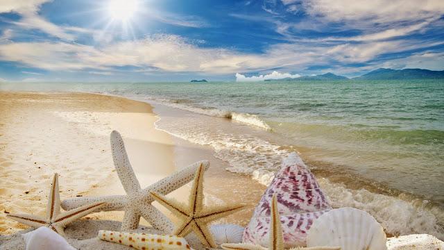 Estrellas de Mar y Caracoles en la playa